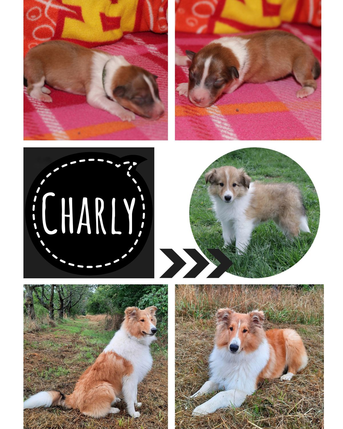 Collage-Charly-6Monate